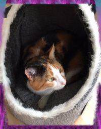 Katzenhöhle PetPäl